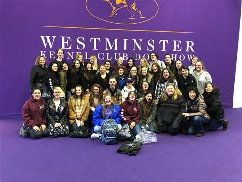ANIMAL SCIENCE STUDENTS ATTEND 143RD WESTMINSTER KENNEL CLUB DOG SHOW - 2/12/19