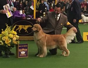 STUDENTS ATTENDING THE ANIMAL SCIENCE PROGRAM ATTEND WESTMINSTER DOG SHOW, NYC