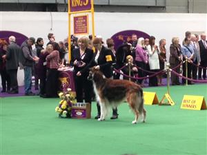 Judges at the Westminster Dog Show